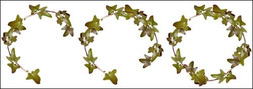 ivy wreath digital scrapper