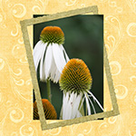 Savvy Selection – Hide Part of a Frame Behind a Photo